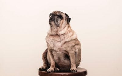 Is Your Dog Out of Shape? Get Fit Together!